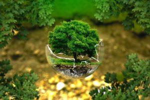 Les nouvelles néobanques soucieuses de l'environnement